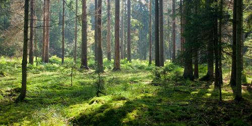Samlet for en bærekraftig fremtid