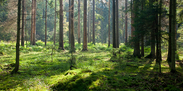 Innvirkningen på miljøet