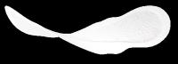 lights by TENA Ultra Binden mit Flügeln – dünn und diskret